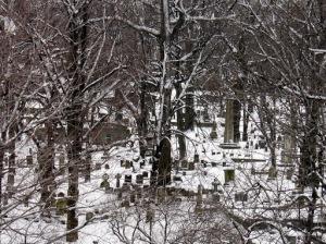 Audubon Park after the White Hurricane